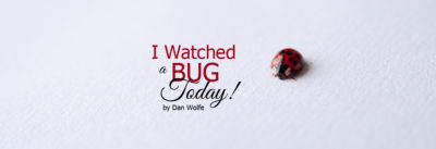 i watched a bug today